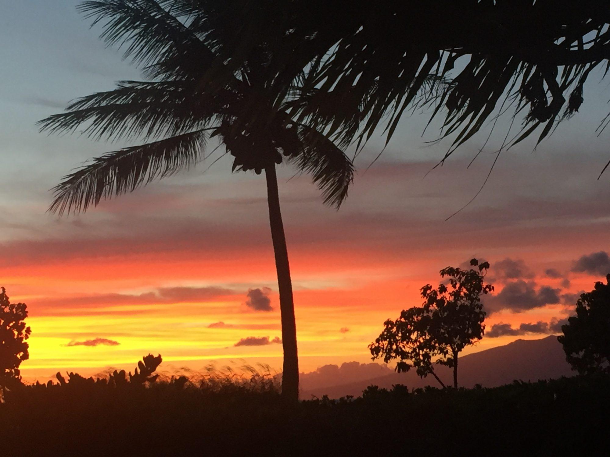 Lives Aloha